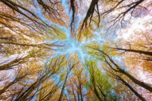 Bild: Umwelt