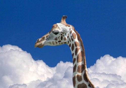 Bild: Giraffe über den Wolken
