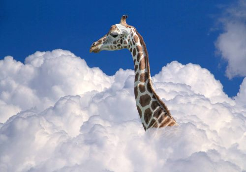 head of a giraffe above white clouds in front of blue sky